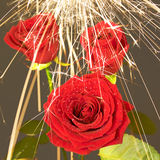 Rose unter dem Funkenregen 8 Lizenzfreie Stockfotos