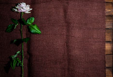 Rose in upright on fabric background Stock Photos