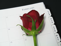 Rose for Valentine's Day. A red rose on a February planner page to mark Valentine's Day royalty free stock photo