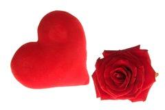 rose valentiner Arkivfoto