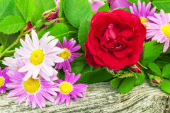 Rose with a variety of flowers Stock Image