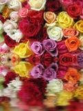 Rose variopinte Immagini Stock