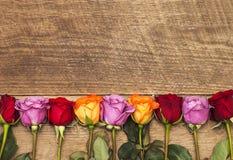 Rose variopinte Fotografia Stock Libera da Diritti