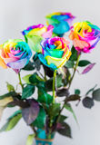 Rose variopinte Fotografia Stock