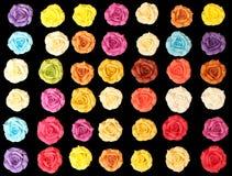 Rose variopinte Immagini Stock Libere da Diritti