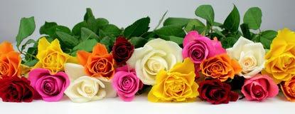 Rose variopinte Fotografie Stock