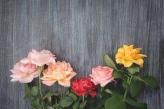 Rose variopinte su fondo di legno scuro Immagine Stock