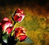 Rose variopinte su oscurità Fotografie Stock Libere da Diritti