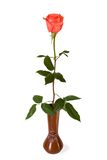 The rose in a vase. The rose in a ceramic vase on white background Stock Photo