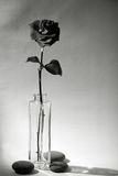 Rose in the vase Royalty Free Stock Photos