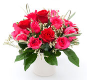 Rose in vase. Red and pink rose in white vase Stock Photos