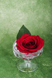 Rose in a vase on a artsy background with copyspace Royalty Free Stock Photos