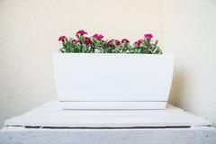Rose in vaso da fiori longitudinale in bianco bianco decorativo sulla cassa dipinta bianca, sul balcone domestico Fondo floreale  immagine stock