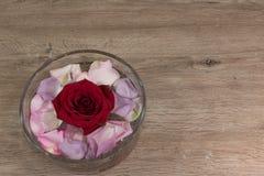 rose vatten Royaltyfria Foton