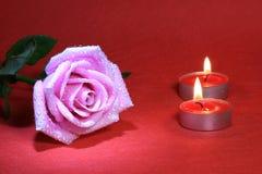 rose vatten för droppe Royaltyfria Bilder