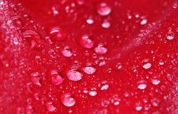 rose vatten för liten droppe Royaltyfria Foton