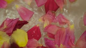 rose vatten för petals lager videofilmer