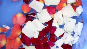 rose vatten för petals arkivfilmer
