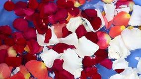 rose vatten för petals stock video