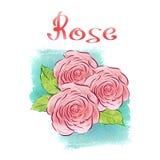 rose vattenfärg Royaltyfri Fotografi