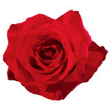 Rose (vector) Royalty Free Stock Images