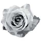 Rose (vector) Royalty Free Stock Photography