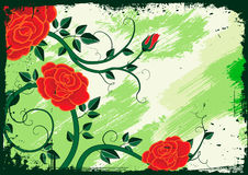 Rose vector Stock Images