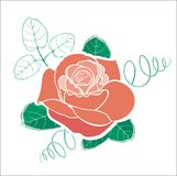 Rose vector drawing Stock Image