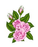 Rose vector by hand drawing. Beautiful flower on white background.Rose art highly detailed in line art style.Rosa queen elizabeth rose for wallpaper Royalty Free Stock Image