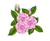 Rose vector by hand drawing. Beautiful flower on white background.Rose art highly detailed in line art style.Rosa queen elizabeth rose for wallpaper Stock Photo