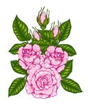 Rose vector by hand drawing. Beautiful flower on white background.Rose art highly detailed in line art style.Rosa queen elizabeth rose for wallpaper Stock Image