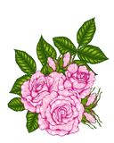 Rose vector by hand drawing. Beautiful flower on white background.Rose art highly detailed in line art style.Rosa queen elizabeth rose for wallpaper Royalty Free Stock Photo
