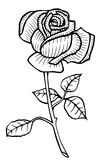 Rose Vector Hand drawn Royalty Free Stock Image
