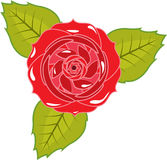 Rose Vector Royalty Free Stock Image