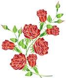Rose Vector Illustration en Ontwerp Royalty-vrije Stock Foto