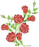 Rose Vector Illustration et conception Photo libre de droits
