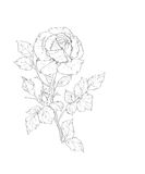 Rose vector illustration Royalty Free Stock Photography