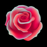 Rose. Vector illustration Stock Photos