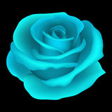 Rose. Vector illustration Royalty Free Stock Image