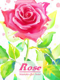 Rose vector Stock Image