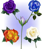 Rose Vector Illustrations Lizenzfreie Stockbilder