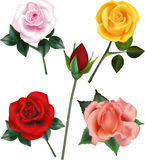 Rose Vector Illustrations. A pink rose, a yellow rose, a red rose bud, a red rose and a peach rose bloom Stock Photography