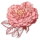 Rose. Vector image of blooming rose Royalty Free Stock Photo