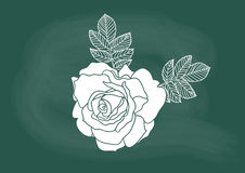Rose, vector of the rose flower drawing on blackboard chalk Royalty Free Stock Images