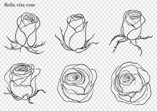 Rose vector set by hand drawing. Beautiful flower on white background.Rose art highly detailed in line art style.Bella vita rose for wallpaper Stock Photos