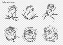 Rose vector set by hand drawing. Beautiful flower on white background.Rose art highly detailed in line art style.Bella vita rose for wallpaper Stock Photography