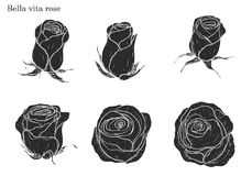 Rose vector set by hand drawing. Beautiful flower on white background.Rose art highly detailed in line art style.Bella vita rose for wallpaper Royalty Free Stock Image