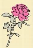 rose vektor Royaltyfri Foto