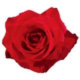 Rose (Vektor) Lizenzfreie Stockbilder