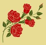 Rose Vetora no fundo de creme Fotografia de Stock Royalty Free